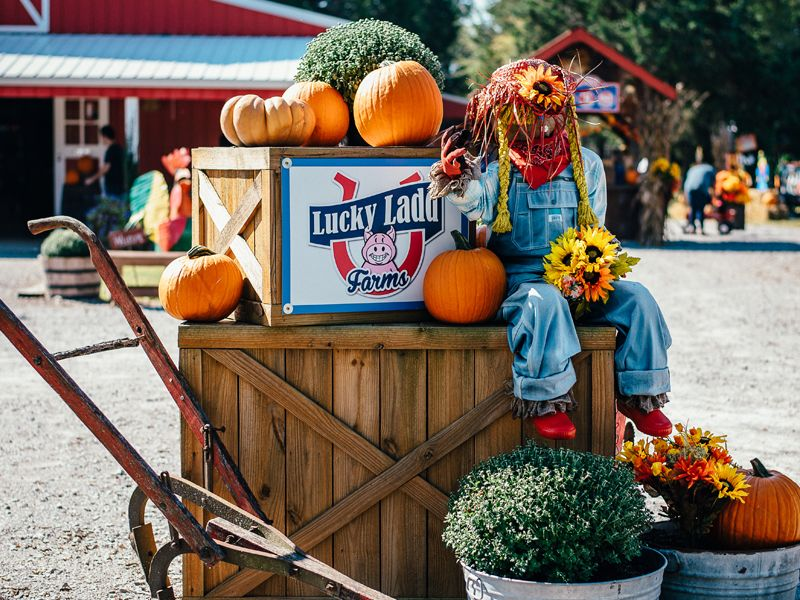Featured TOP FIVE Best Pumpkin Patches in the South.