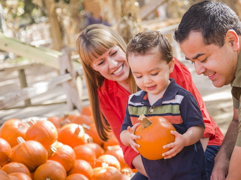 Fall Family Traditions Start at Lucky Ladd's Pumpkin Patch