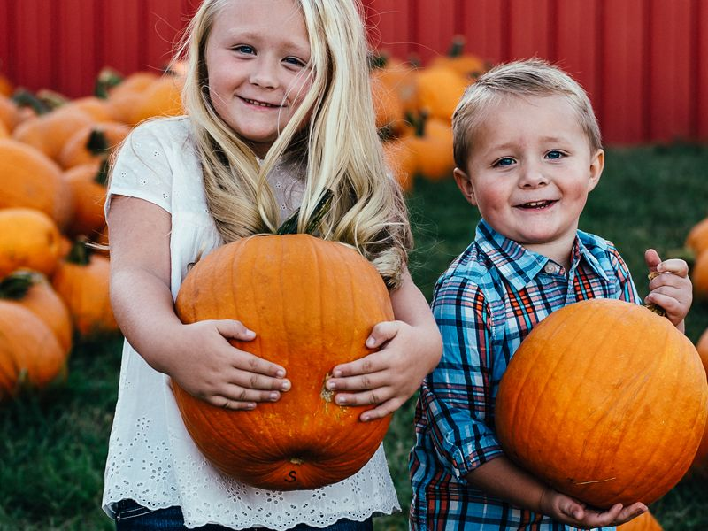 With thousands of pumpkins to choose from, you're sure to find the perfect pumpkin one!
