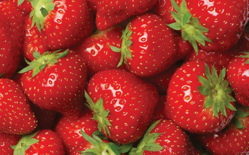 Pick-your-own strawberries, u-pick strawberry farm | Murfreesboro, Franklin and Nashville, TN