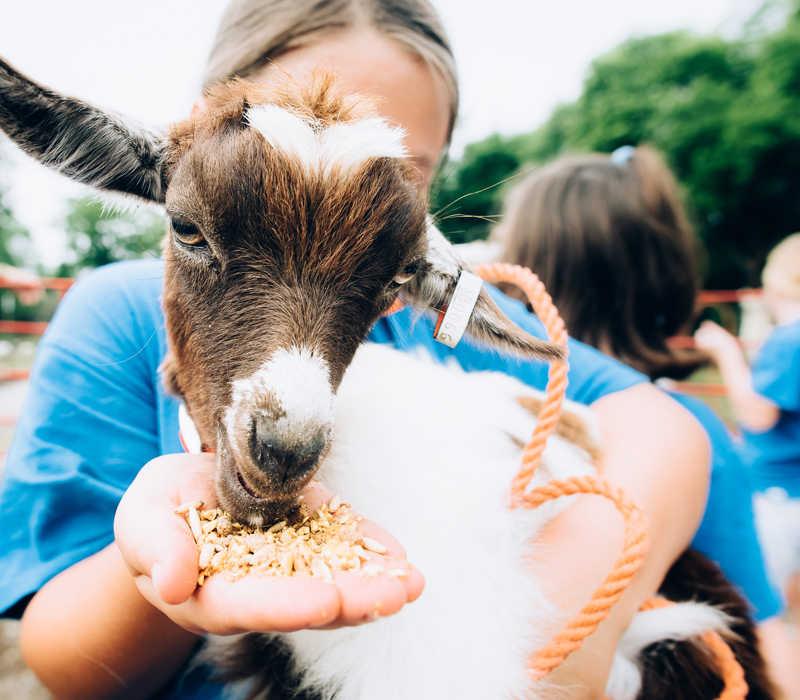 Petting Zoo, Family Fun Park Entertainment Destination